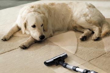 vacuum-cleaner-for-pet-hair-1